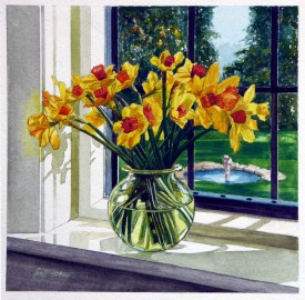 Spring Daffodils. 51cm x 51cm. Watercolour [These daffodils just caught the light of the rising morning sun on our kitchen window]